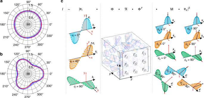 Fast and quantitative 2D and 3D orientation mapping using Raman micros