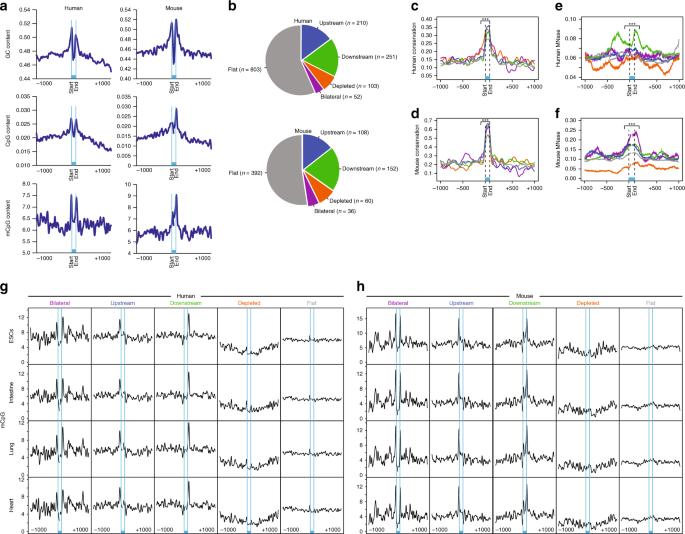 DNA methylation directs microRNA biogenesis in mammalian cells