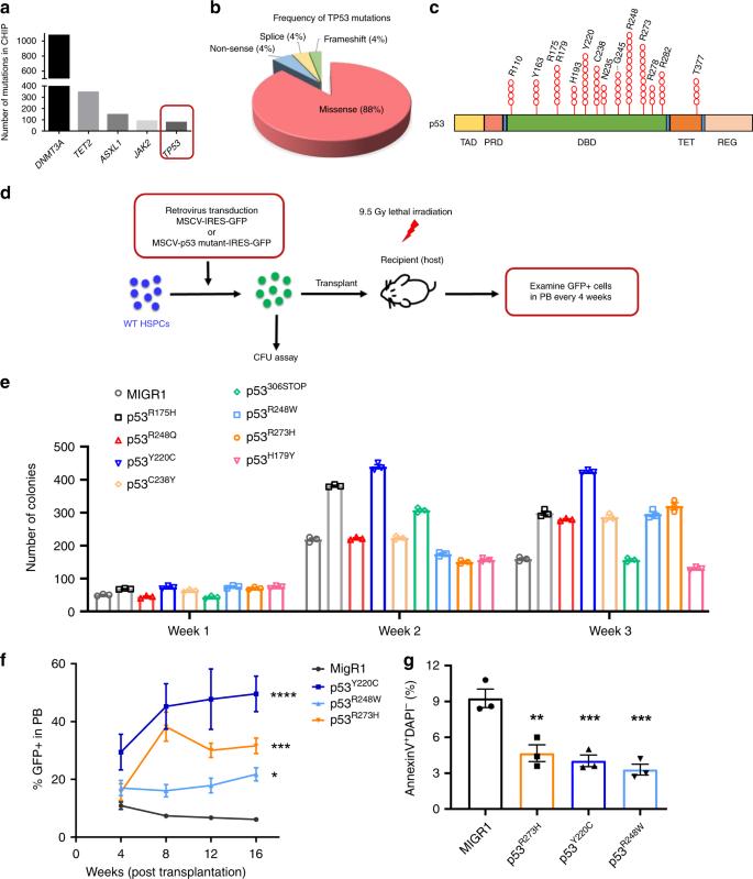 Mutant p53 drives clonal hematopoiesis through modulating epigenetic p