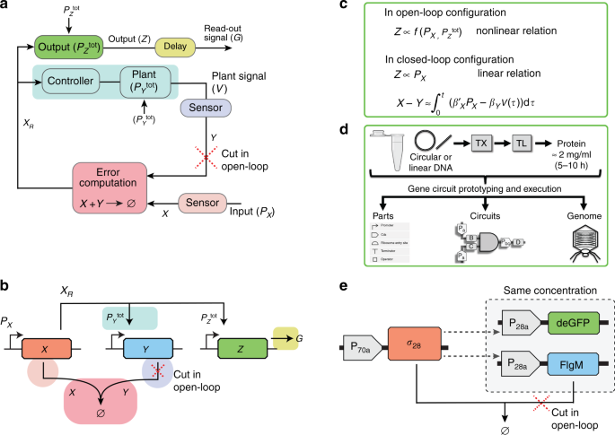 In vitro implementation of robust gene regulation in a synthetic biomo