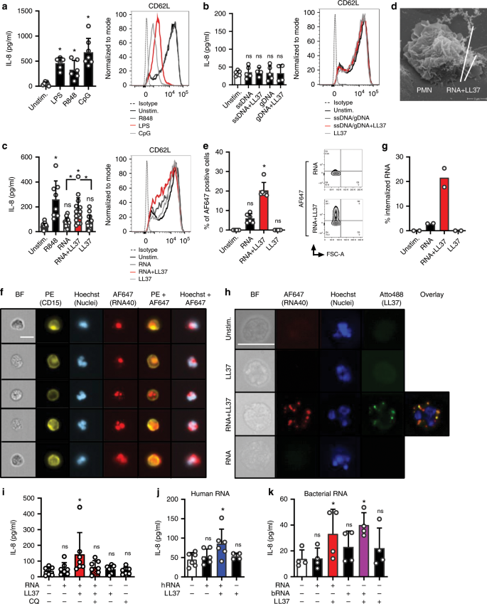 Neutrophil extracellular trap-associated RNA and LL37 enable self-ampl