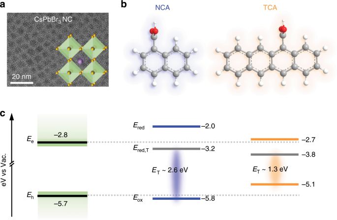 Mechanisms of triplet energy transfer across the inorganic nanocrystal