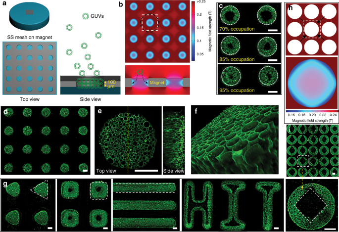 Programmed magnetic manipulation of vesicles into spatially coded prot