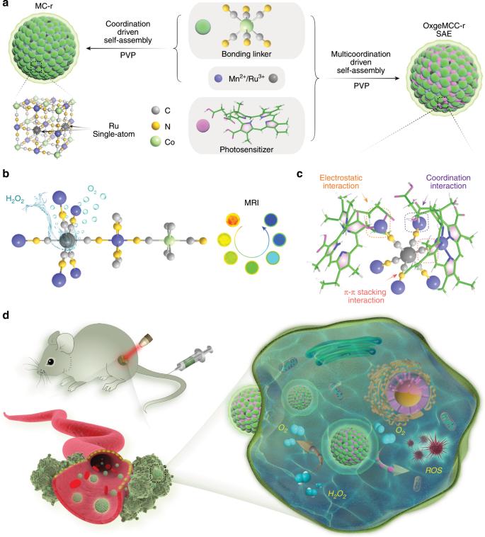 Self-assembled single-atom nanozyme for enhanced photodynamic therapy