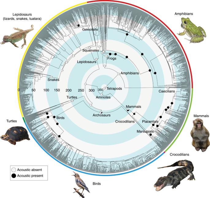 The origins of acoustic communication in vertebrates