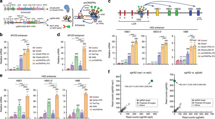 Interrogation of enhancer function by enhancer-targeting CRISPR epigen