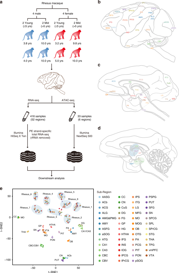 Transcriptomic and open chromatin atlas of high-resolution anatomical