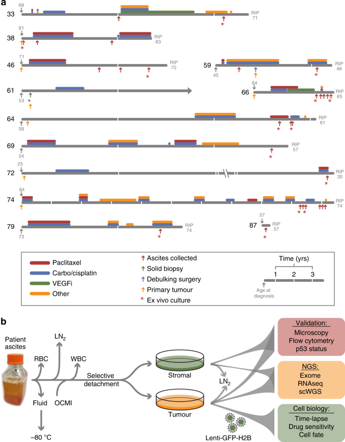 A Living Biobank Of Ovarian Cancer Ex Vivo Models Reveals Profound Mitotic Heterogeneity Nature Communications