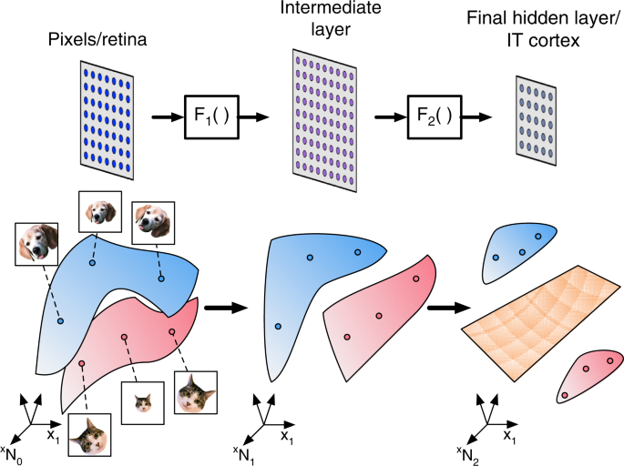 Separability and geometry of object manifolds in deep neural networks