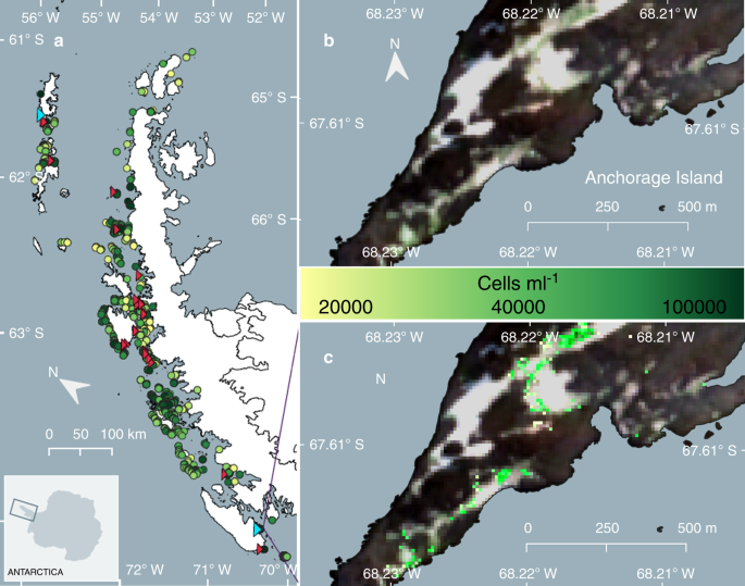 Remote sensing reveals Antarctic green snow algae as important ...