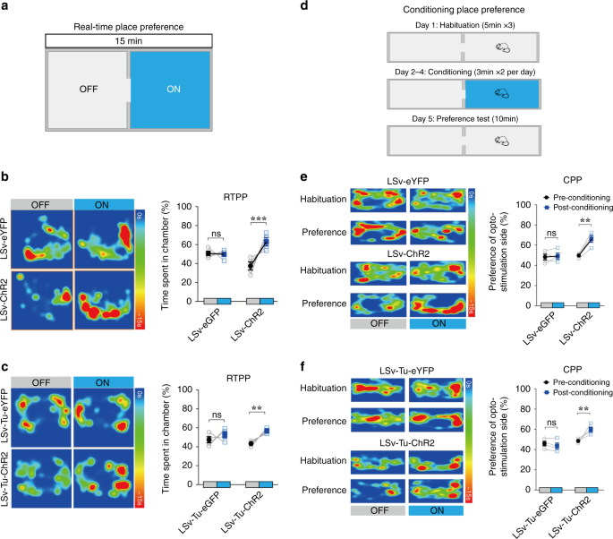 A Limbic Circuitry Involved In Emotional Stress Induced Grooming Nature Communications