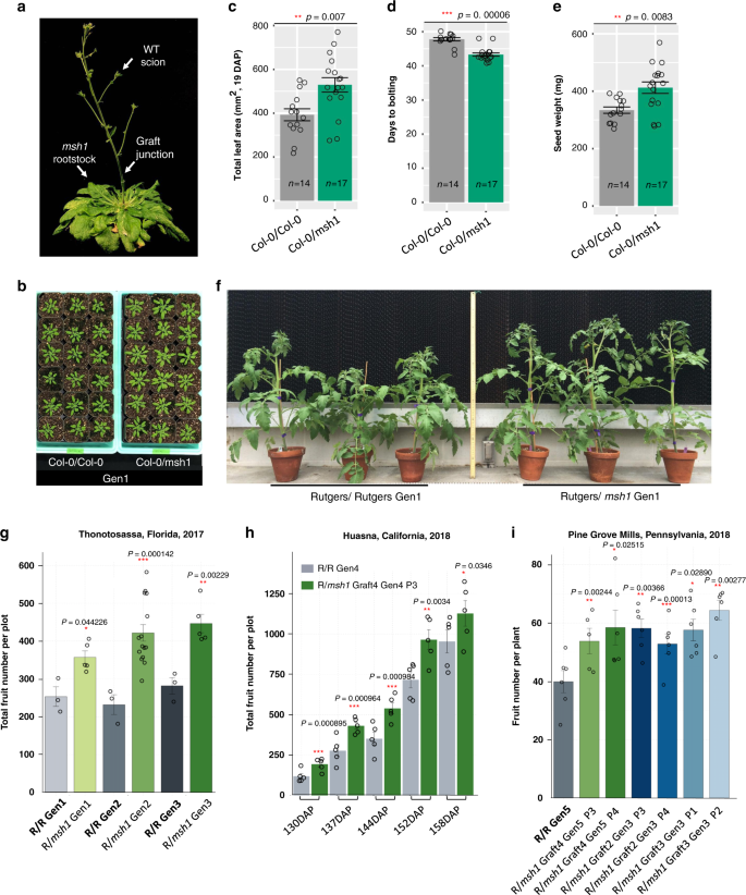 Msh1 Induced Heritable Enhanced Growth Vigor Through Grafting Is Associated With The Rddm Pathway In Plants Nature Communications
