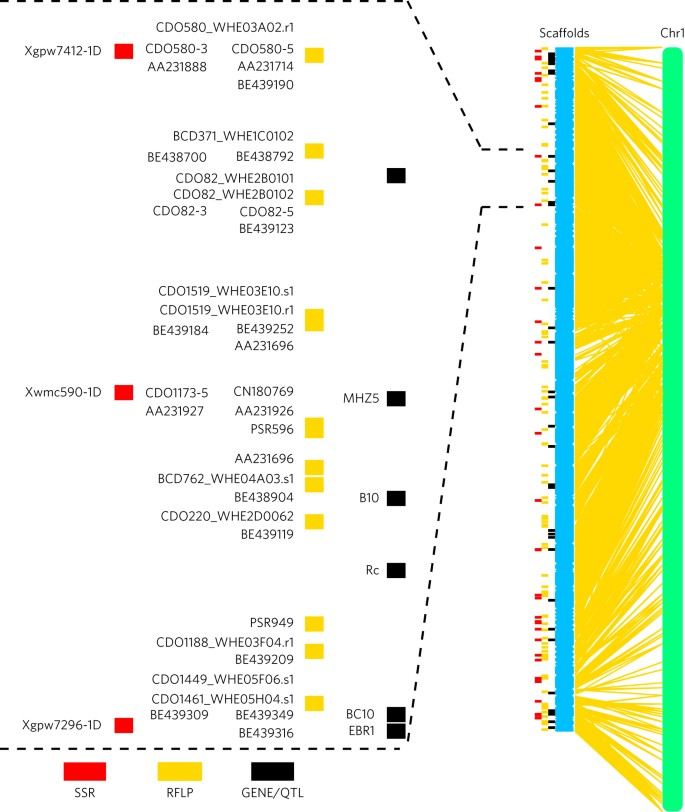 The Aegilops tauschii genome reveals multiple impacts of