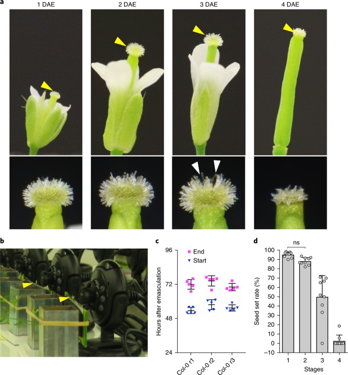 KIRA1 and ORESARA1 terminate flower receptivity by promoting cell
