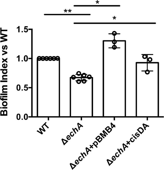 A Putative Enoyl-CoA Hydratase Contributes To Biofilm