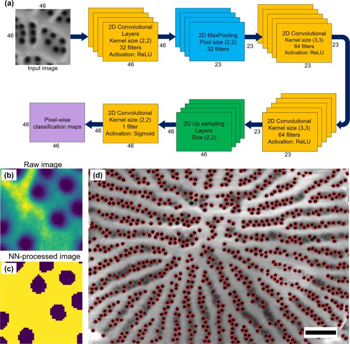 Deep data analytics for genetic engineering of diatoms