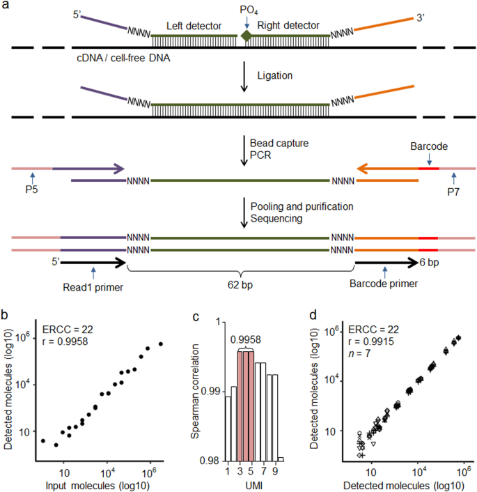 TAC-seq: targeted DNA and RNA sequencing for precise biomarker