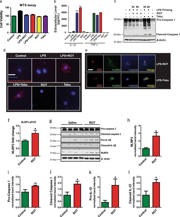 Mitochondrial impairment in microglia amplifies NLRP3 inflammasome