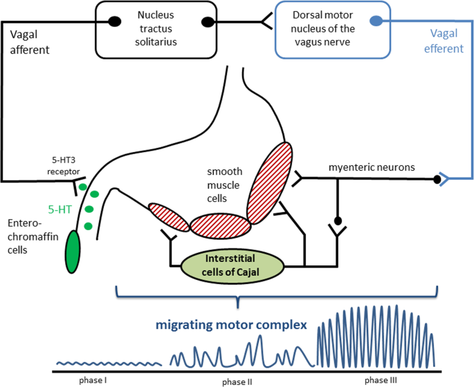 Gastric dysmotility in Parkinson's disease is not caused by altera