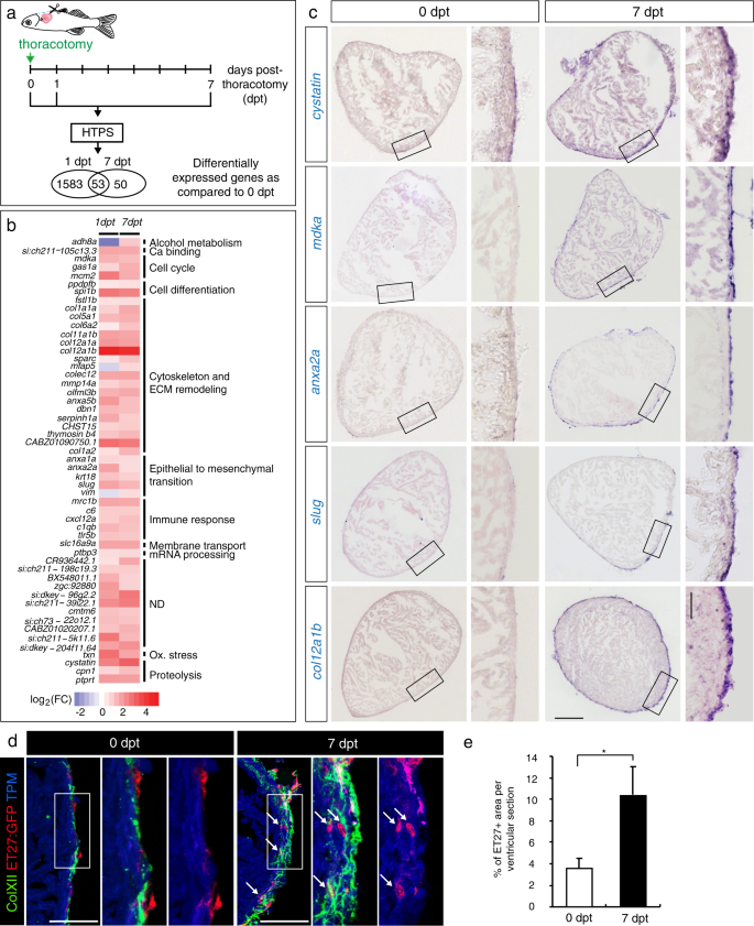 Ciliary neurotrophic factor stimulates cardioprotection and