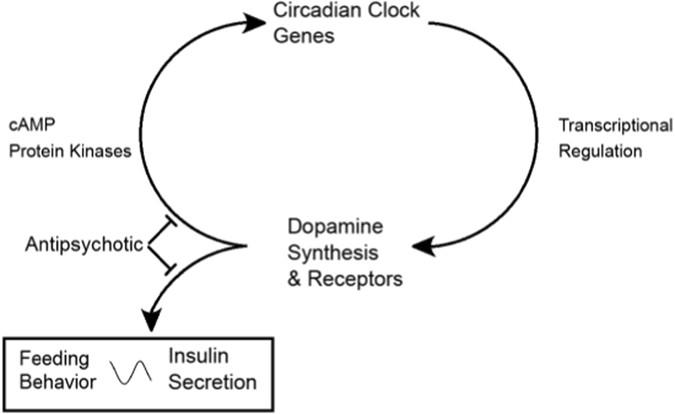 Dopamine D 2 receptors and the circadian clock reciprocally