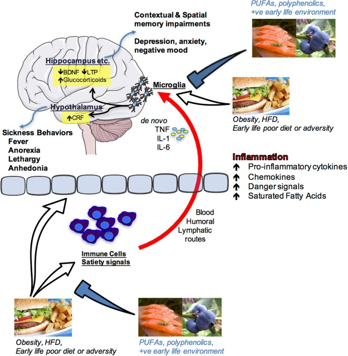Food for thought: how nutrition impacts cognition and