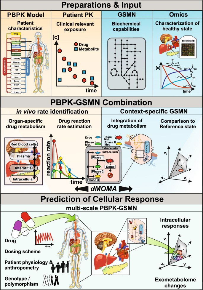 Integration of genome-scale metabolic networks into whole