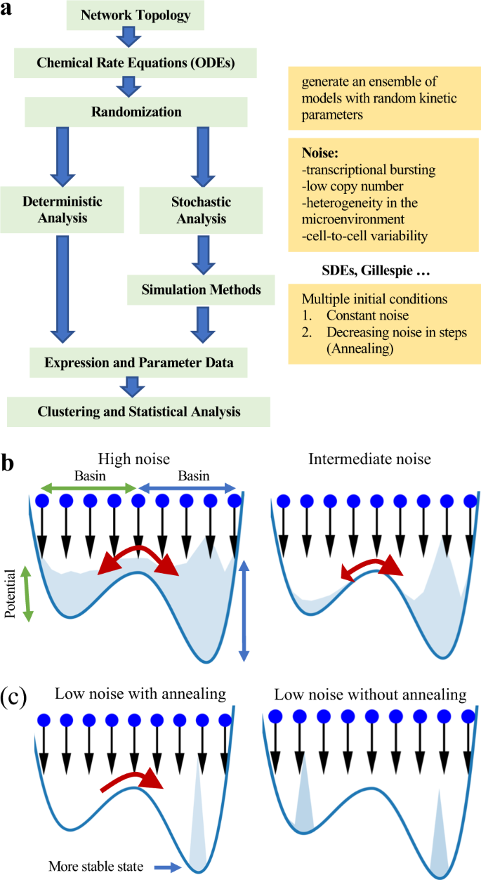 Role of noise and parametric variation in the dynamics of