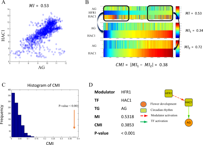 Hierarchical graphical model reveals HFR1 bridging circadian rhythm