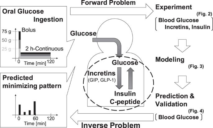 logical design of oral glucose ingestion pattern minimizing blood glucose in humans