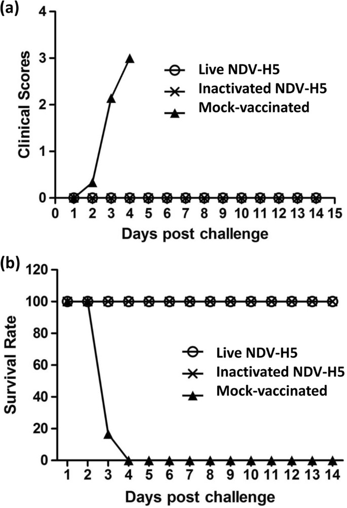 Newcastle disease virus-based H5 influenza vaccine protects