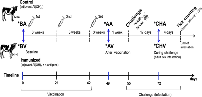 Blood transcriptome profile induced by an efficacious vaccine formulated  with salivary antigens from cattle ticks | npj VaccinesNature