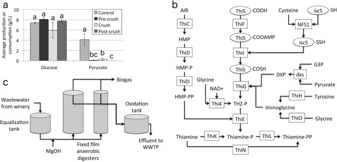 Algal–bacterial synergy in treatment of winery wastewater