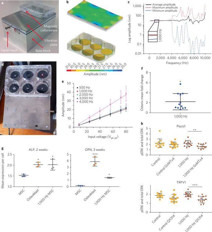 Stimulation of 3D osteogenesis by mesenchymal stem cells using a