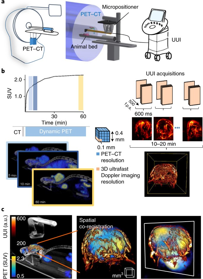 Simultaneous positron emission tomography and ultrafast ultrasound