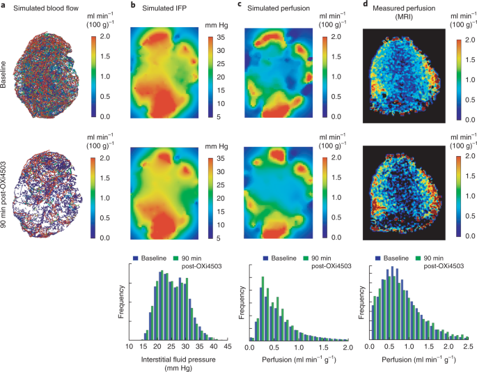 Computational fluid dynamics with imaging of cleared tissue
