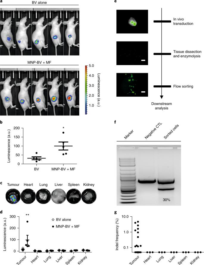 Spatial control of in vivo CRISPR–Cas9 genome editing via