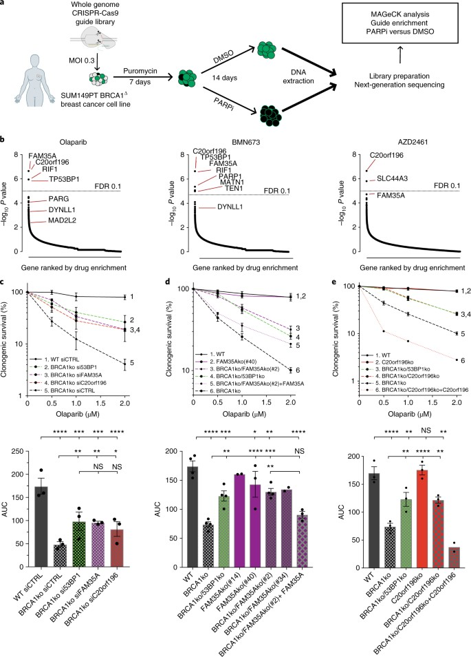 Shieldin complex promotes DNA end-joining and counters