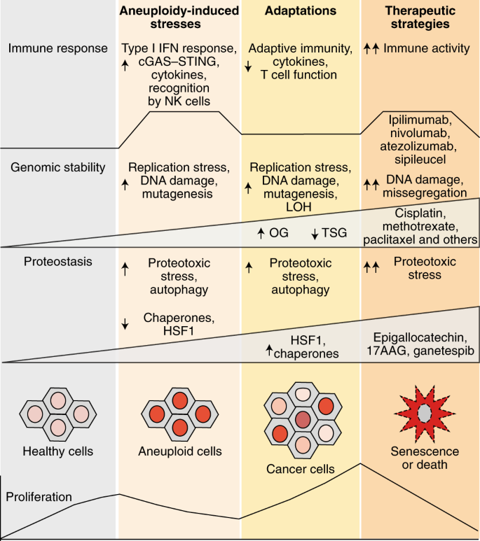 The diverse consequences of aneuploidy | Nature Cell Biology