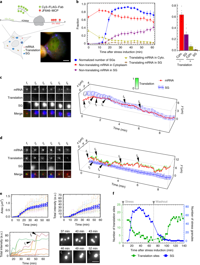 Multicolour single-molecule tracking of mRNA interactions with RNP