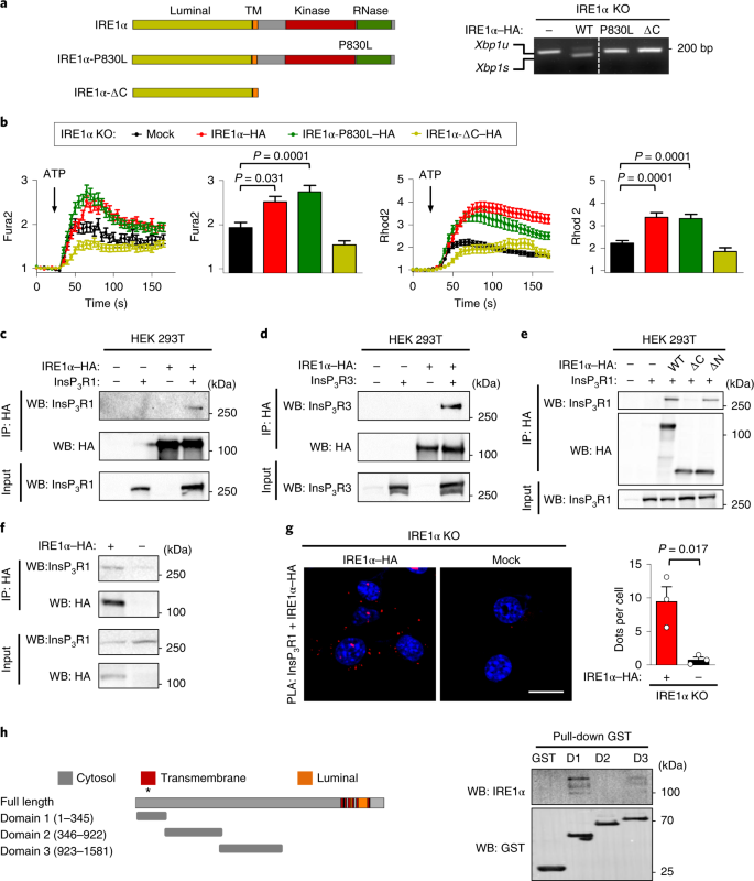 Non-canonical function of IRE1α determines mitochondria