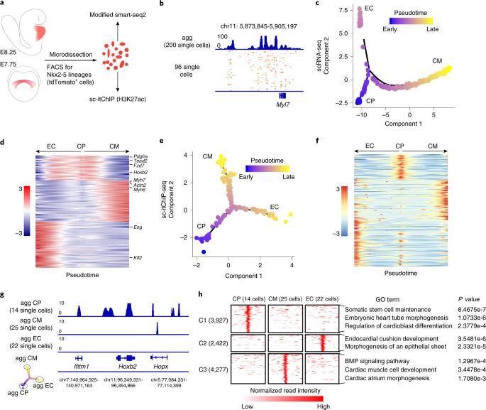 Profiling chromatin states using single-cell itChIP-seq