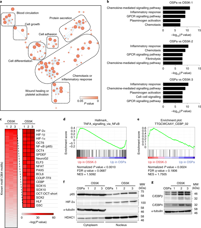 Epigenetic Remodelling Shapes Inflammatory Renal Cancer And Neutrophil Dependent Metastasis Nature Cell Biology