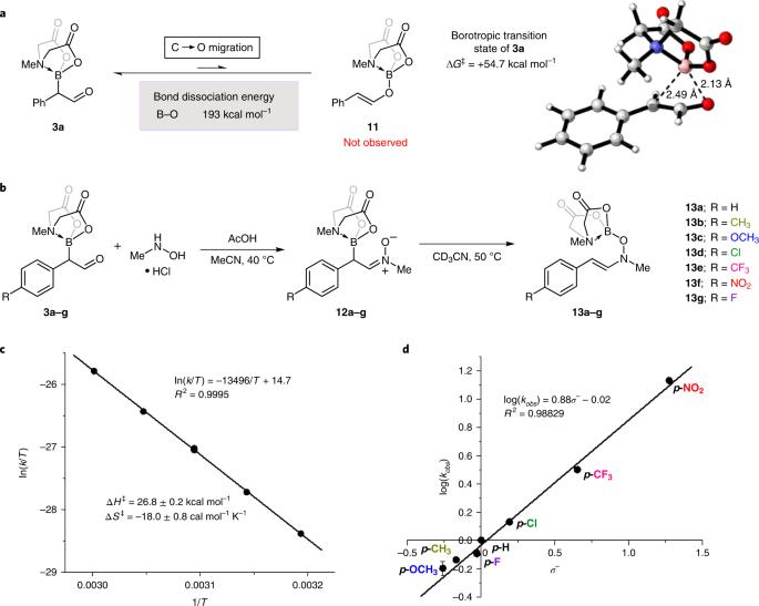Amine hemilability enables boron to mechanistically resemble either