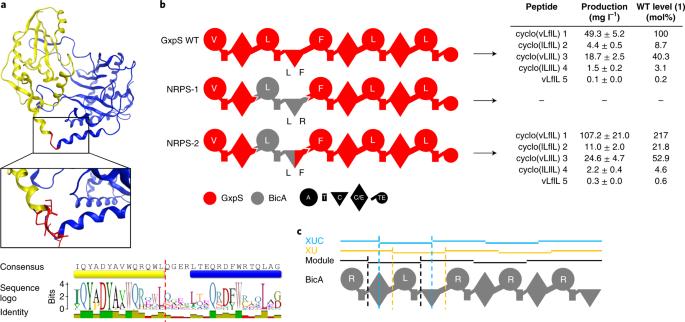 Modification and de novo design of non-ribosomal peptide synthetases