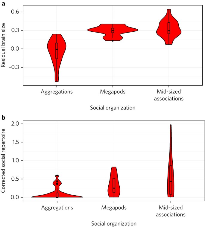 The social and cultural roots of whale and dolphin brains