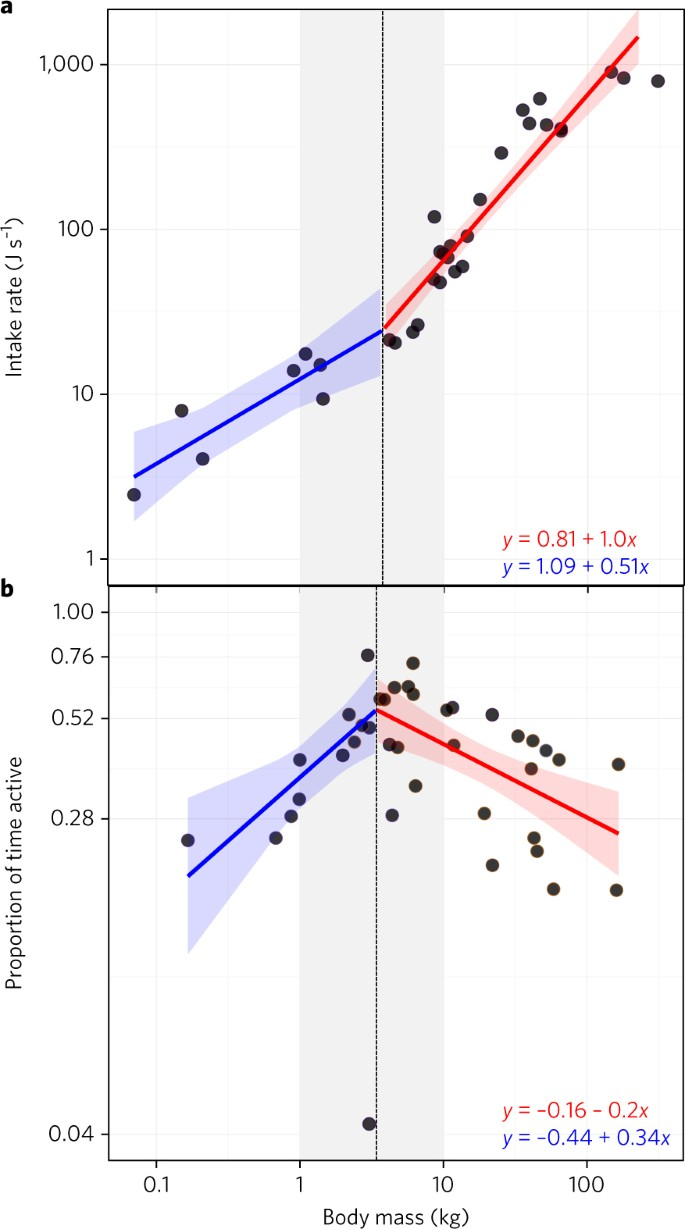 Foraging constraints reverse the scaling of activity time in