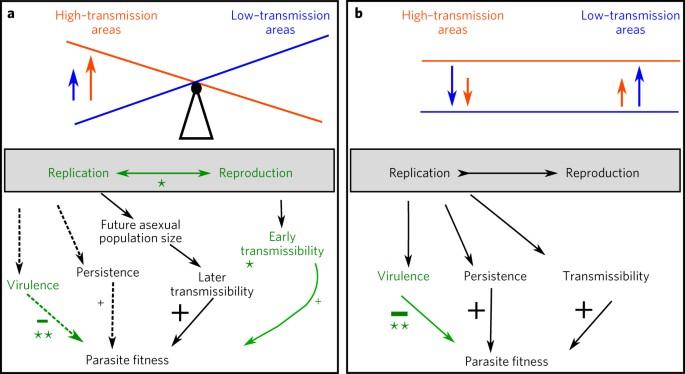 Adaptation of Plasmodium falciparum to its transmission environment
