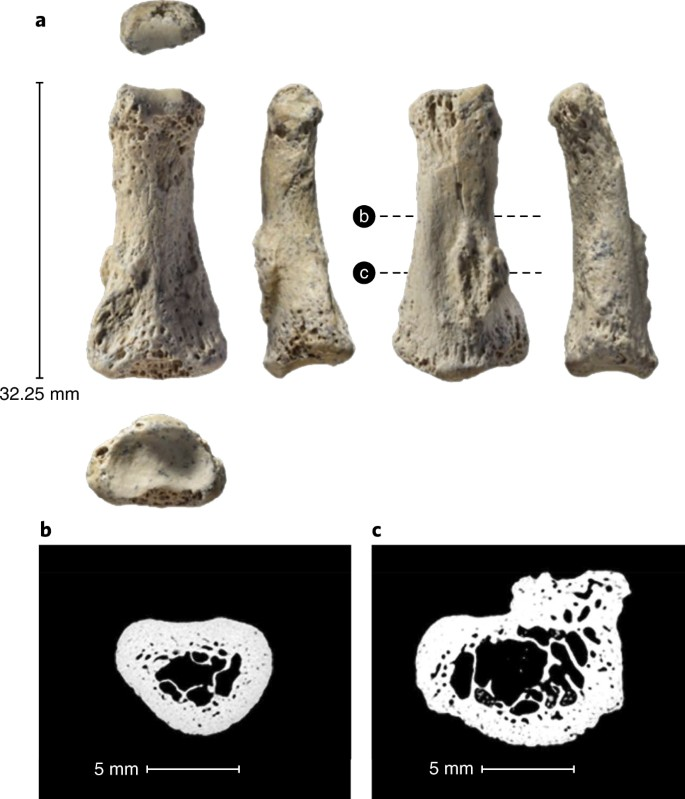 Homo sapiens in Arabia by 85,000 years ago | Nature Ecology & Evolution