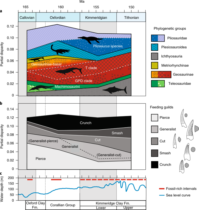 The long-term ecology and evolution of marine reptiles in a